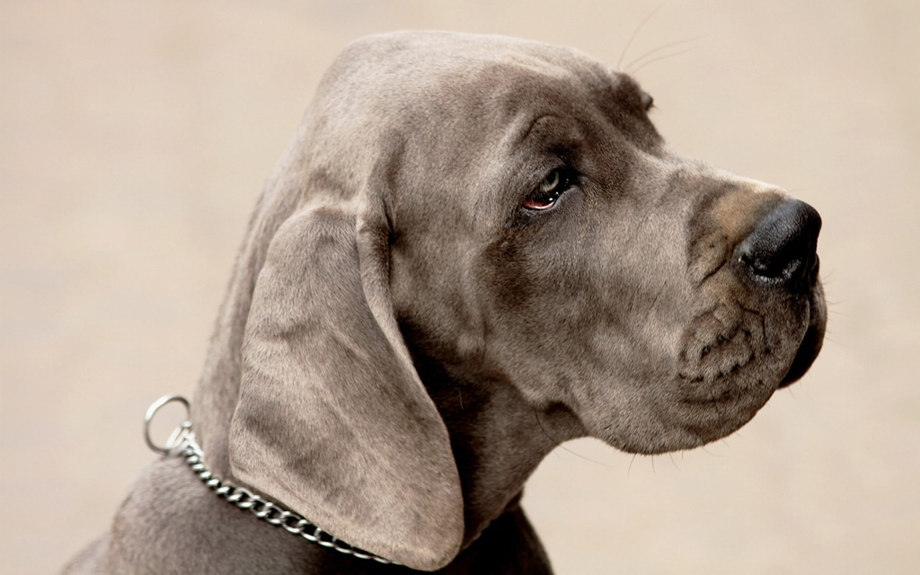 Royal Canin для крупных собак