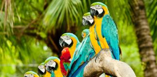 Эти милые болтуны – попугаи