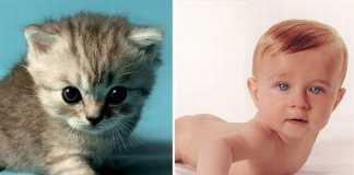 Дети и котята (8 фото)