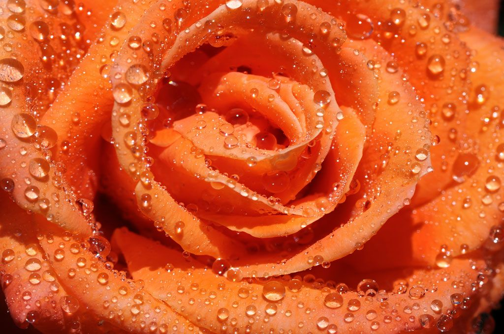 Язык цветов: Какие цветы на свадьбу можно дарить и использовать для свадебного оформления?