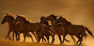 Оформление новогоднего стола на год лошади!