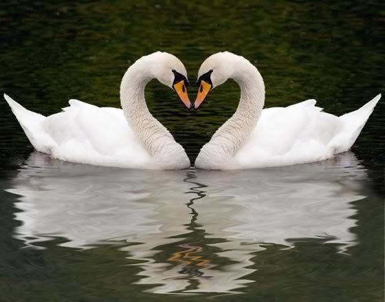 Влюбленность открывает дар стихосложения