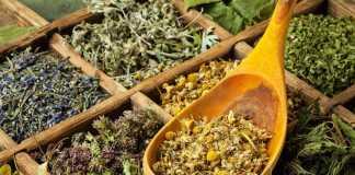 Противопоказания трав и травяных сборов