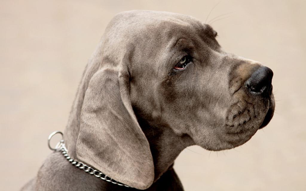 Royal Canin для крупных собак от «ЗООшефа»