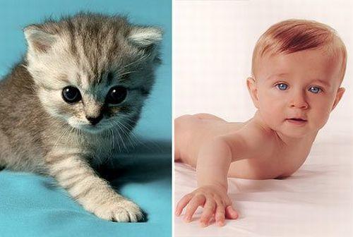 Дети и котята (8 фото) 2