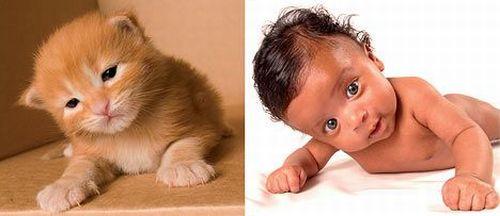 Дети и котята (8 фото) 3