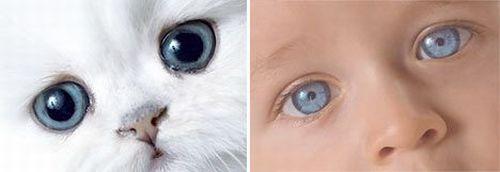 Дети и котята (8 фото) 5