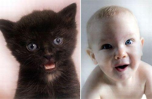 Дети и котята (8 фото) 6