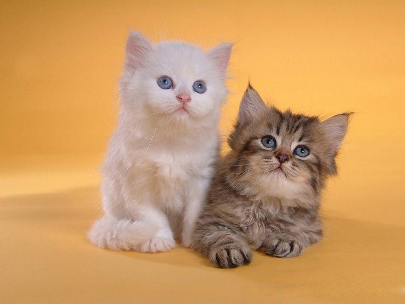 Очень преочень классные фотографии котов (56 фото) 1
