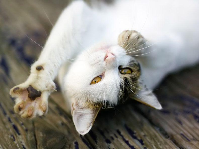 Очень преочень классные фотографии котов (56 фото) 2