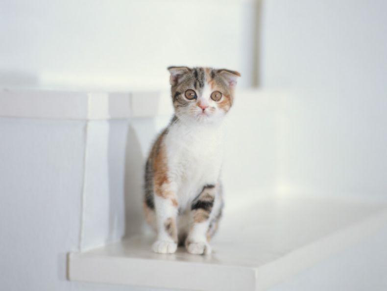 Очень преочень классные фотографии котов (56 фото) 4