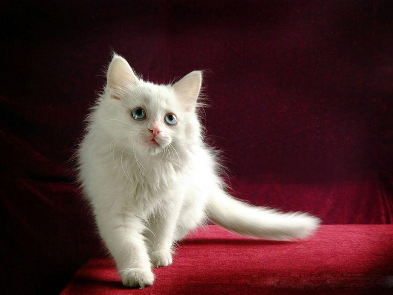 Очень преочень классные фотографии котов (56 фото) 6