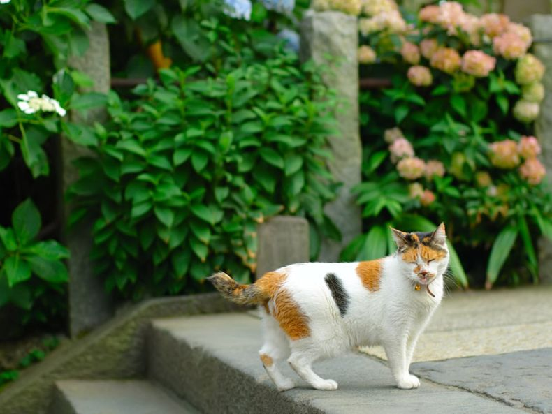 Очень преочень классные фотографии котов (56 фото) 8