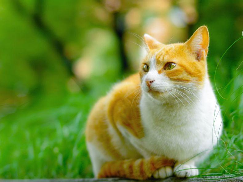 Очень преочень классные фотографии котов (56 фото) 9