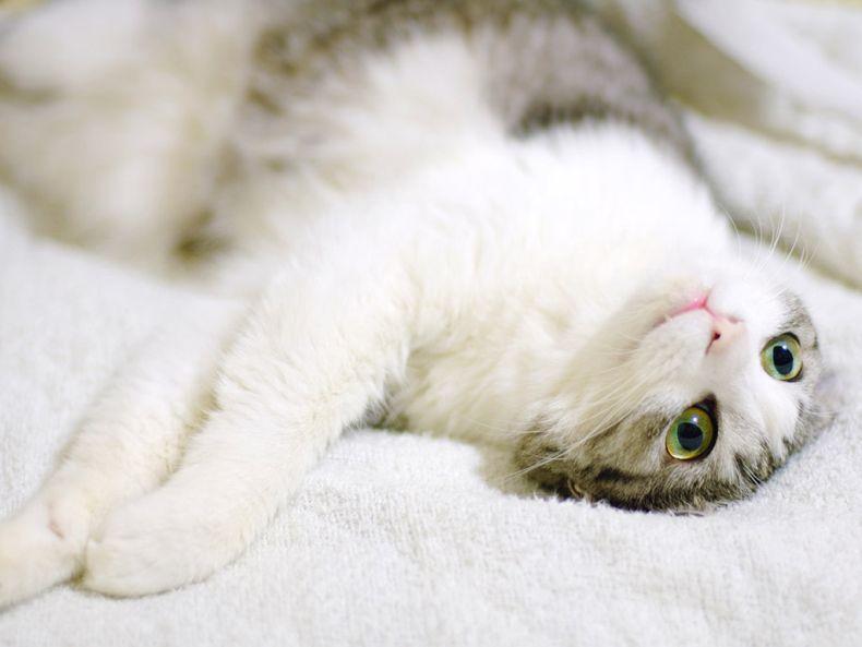 Очень преочень классные фотографии котов (56 фото) 10