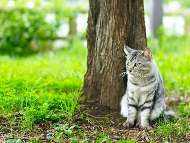 Очень преочень классные фотографии котов (56 фото) 11