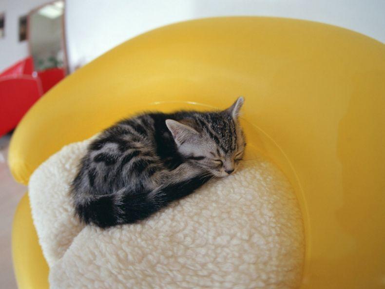 Очень преочень классные фотографии котов (56 фото) 12