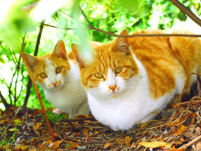 Очень преочень классные фотографии котов (56 фото) 13
