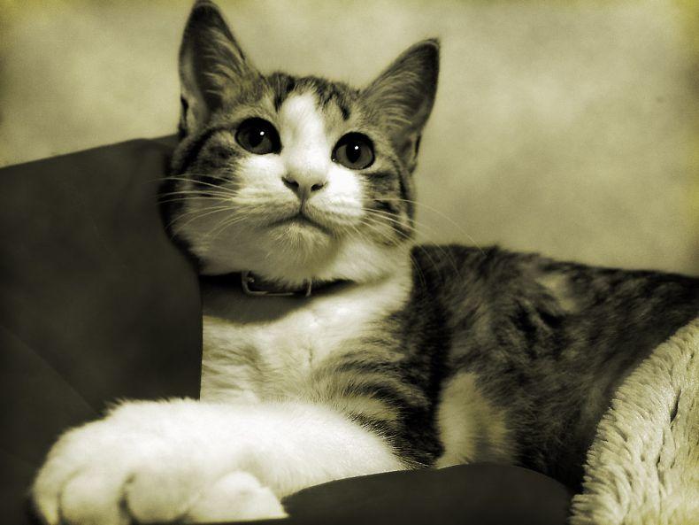 Очень преочень классные фотографии котов (56 фото) 14