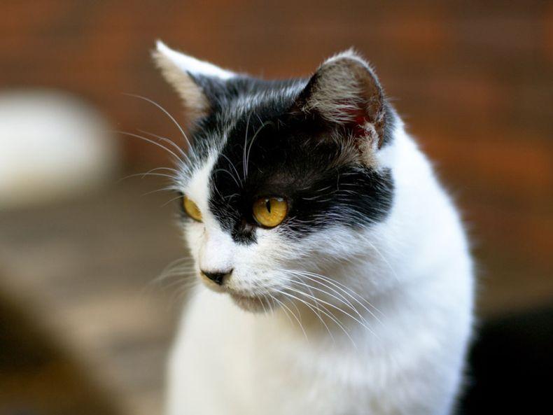 Очень преочень классные фотографии котов (56 фото) 15