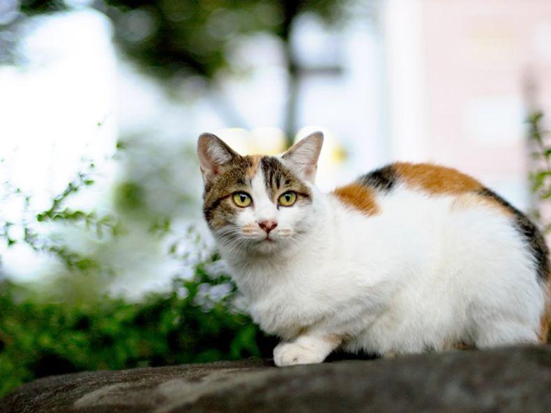 Очень преочень классные фотографии котов (56 фото) 17