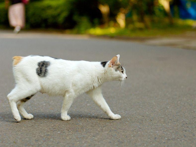Очень преочень классные фотографии котов (56 фото) 18