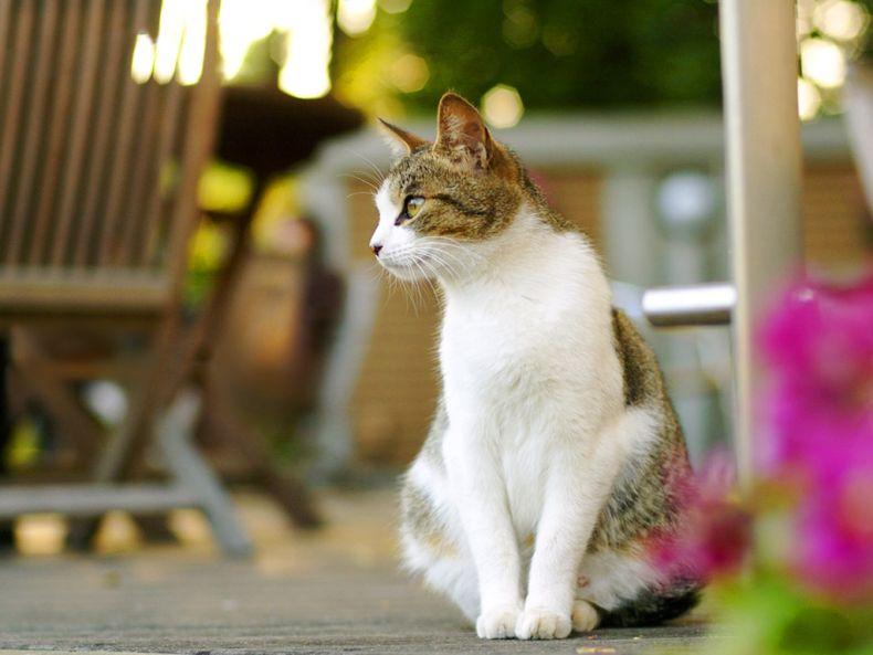 Очень преочень классные фотографии котов (56 фото) 19
