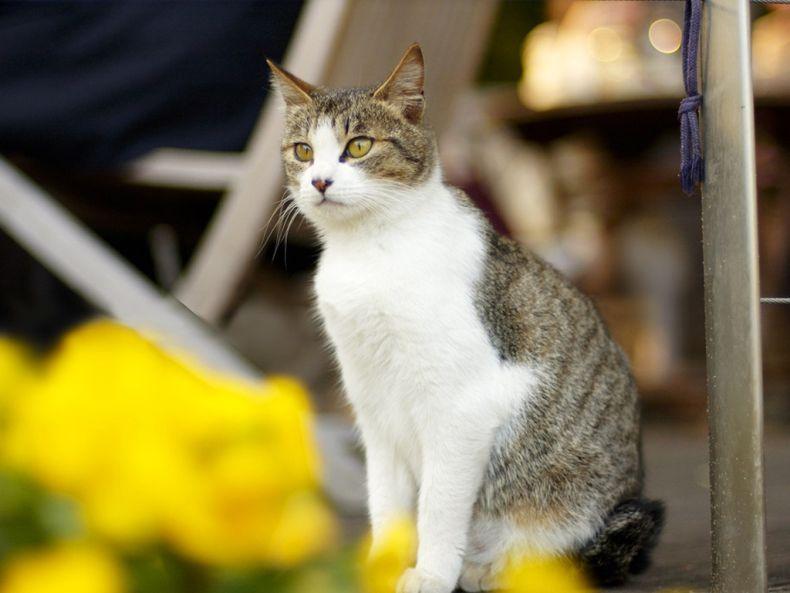 Очень преочень классные фотографии котов (56 фото) 20