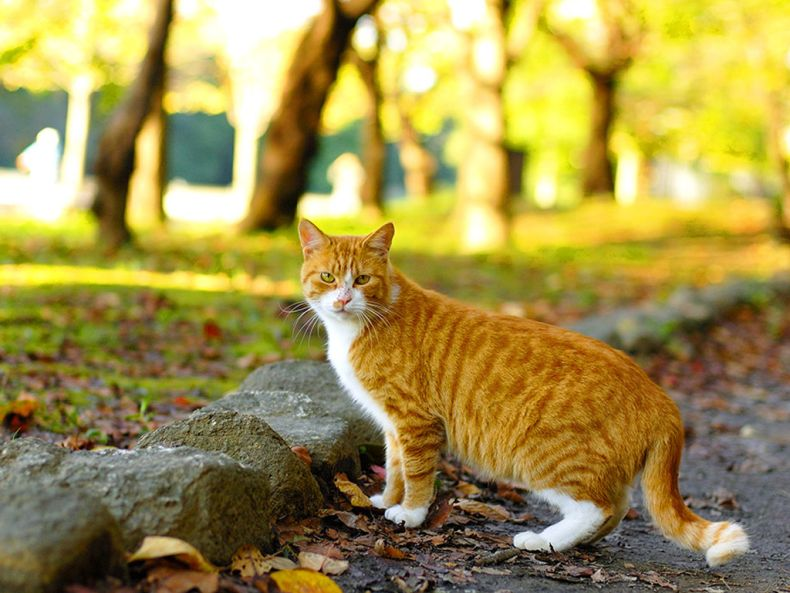 Очень преочень классные фотографии котов (56 фото) 21