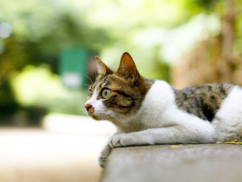 Очень преочень классные фотографии котов (56 фото) 23