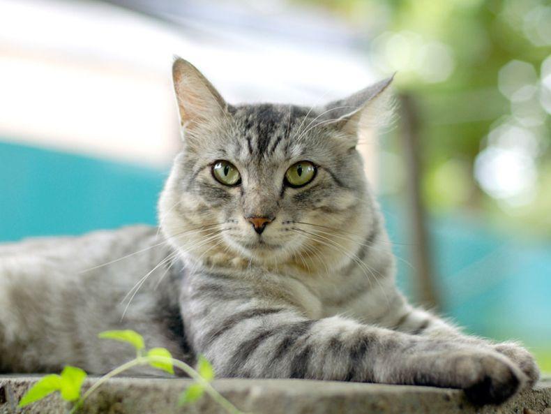 Очень преочень классные фотографии котов (56 фото) 25