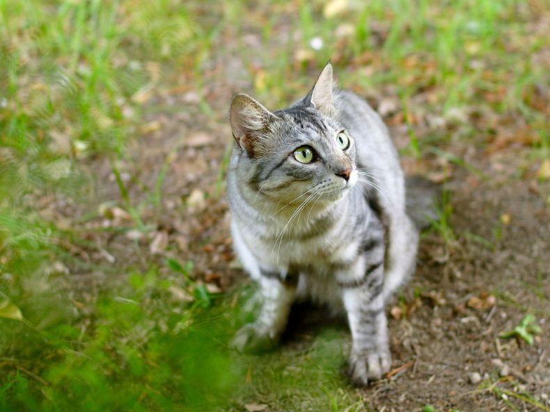 Очень преочень классные фотографии котов (56 фото) 26