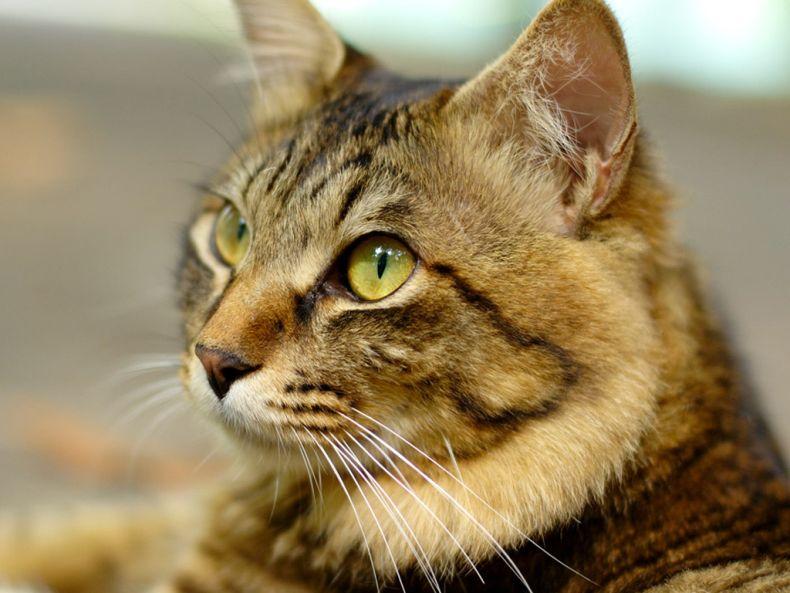 Очень преочень классные фотографии котов (56 фото) 27