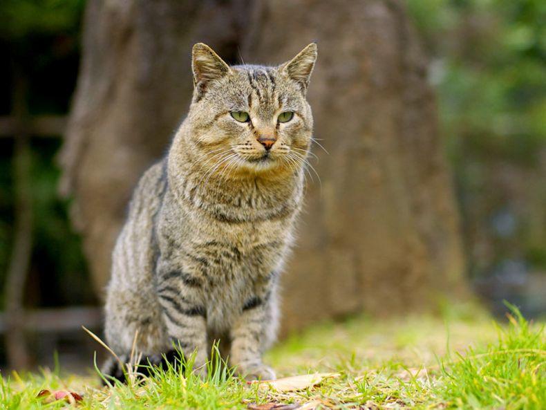 Очень преочень классные фотографии котов (56 фото) 29