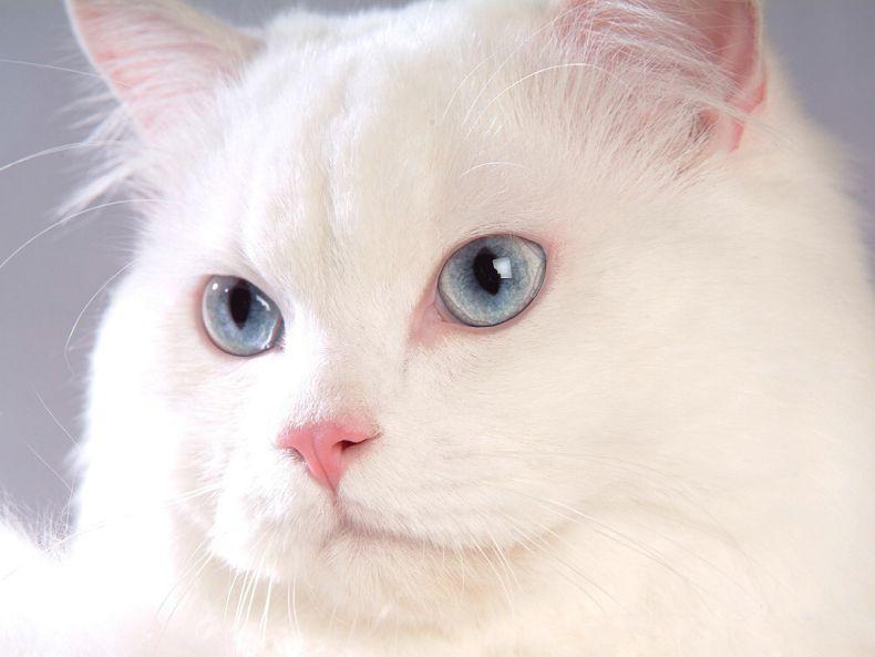 Очень преочень классные фотографии котов (56 фото) 30