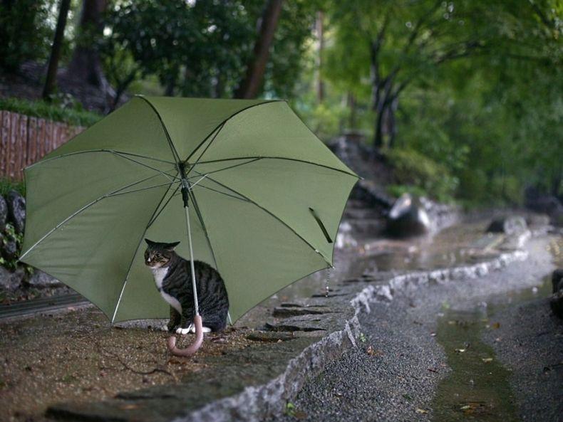 Очень преочень классные фотографии котов (56 фото) 33
