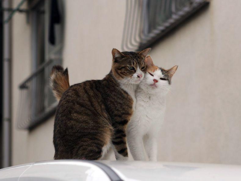 Очень преочень классные фотографии котов (56 фото) 34