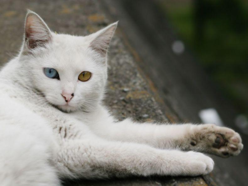 Очень преочень классные фотографии котов (56 фото) 35