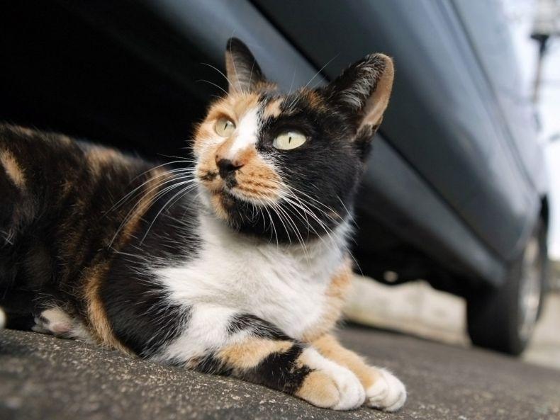 Очень преочень классные фотографии котов (56 фото) 36