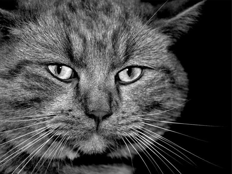 Очень преочень классные фотографии котов (56 фото) 37