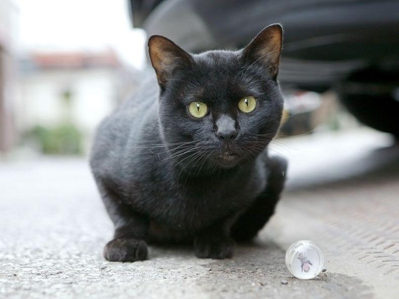 Очень преочень классные фотографии котов (56 фото) 38