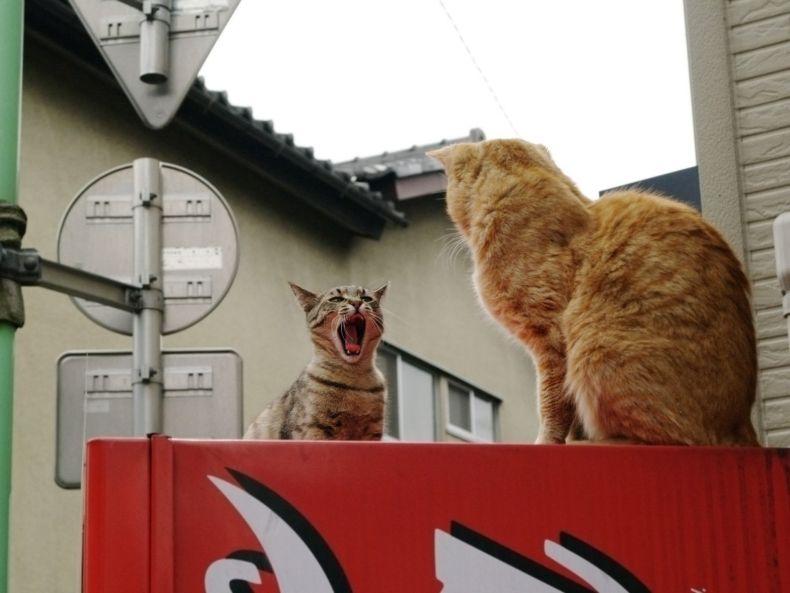 Очень преочень классные фотографии котов (56 фото) 40