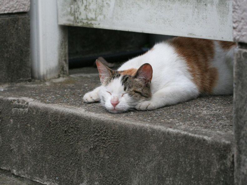 Очень преочень классные фотографии котов (56 фото) 41