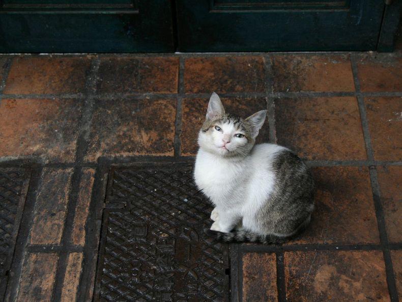 Очень преочень классные фотографии котов (56 фото) 42