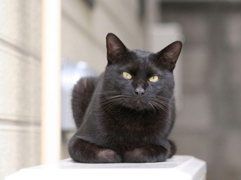 Очень преочень классные фотографии котов (56 фото) 43
