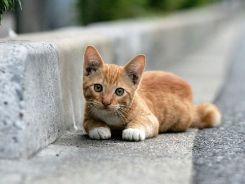 Очень преочень классные фотографии котов (56 фото) 44