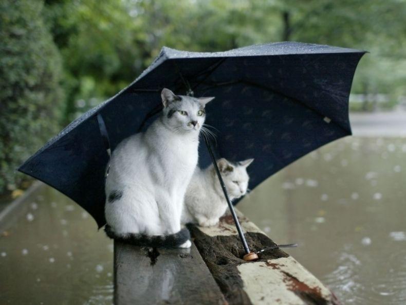 Очень преочень классные фотографии котов (56 фото) 45