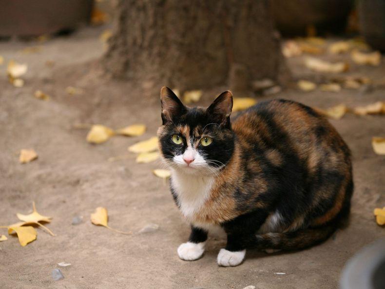 Очень преочень классные фотографии котов (56 фото) 46