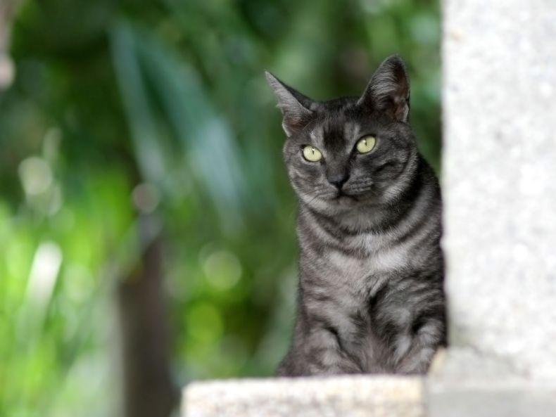 Очень преочень классные фотографии котов (56 фото) 47