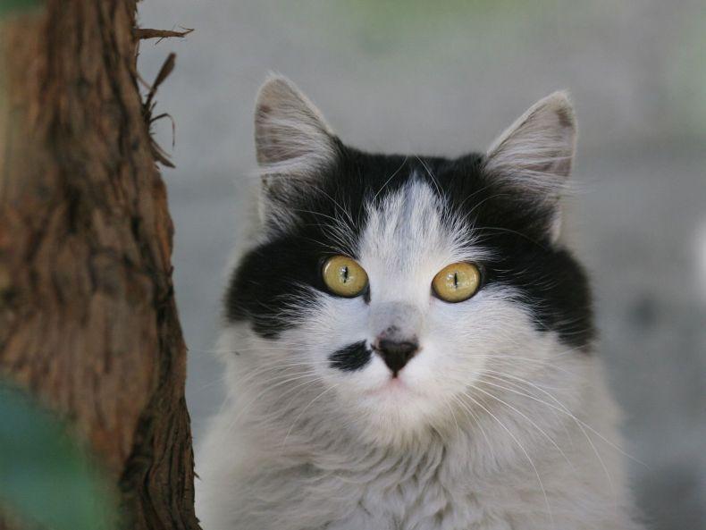 Очень преочень классные фотографии котов (56 фото) 48